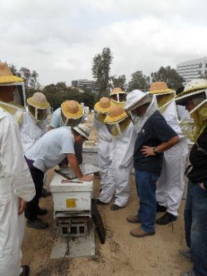 קורס דבורים