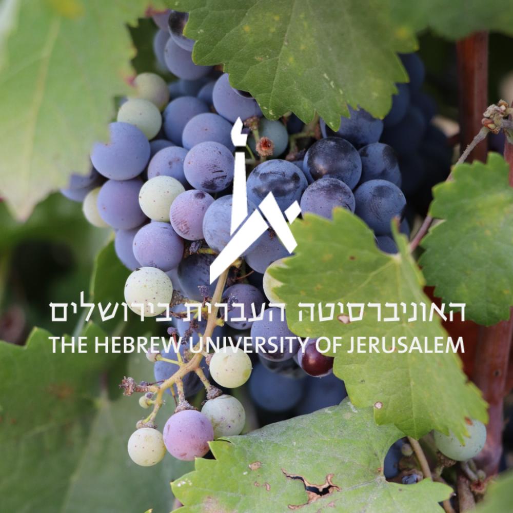 viticulture HUJI